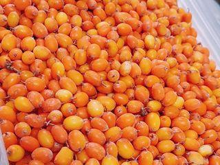 Vindem catina de culoare orange -  calitate superioara