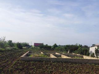 Vind loc de casă satul Petrești,Ungheni lîngă traseu