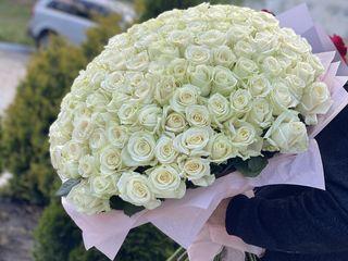 Trandafiri moldovenești! 1500 lei 70cm / 101 bucati!