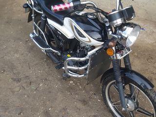 Alpha Moto RX NEW