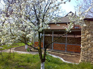 Дом-дача в с Гоян , Дубоссарского района на самом берегу Днестра. Фруктовый сад , виноградник Газ