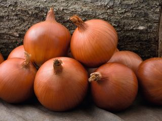 Caoba F1 (Olanda) - semințe de ceapă / Семена лука Каоба F1 (Голландия)