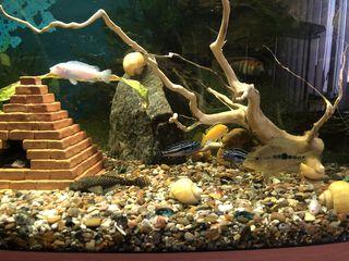 Аквариум с рыбами и совсем комплектующим