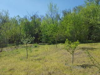 Продаём Земельный участок под строительство .Cosernita, Criuleni, 1.5 мин. от трассы,6 соток земли