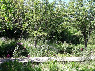 Vind teren ideal pentru constructia unei vile