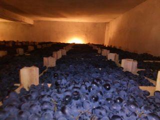 Vînd struguri de masă Moldova 21 tone