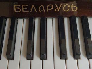Настройщик фортепиано.