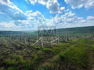 Spre vânzare - teren agricol amplasat în orașul Durlești, 24 ari