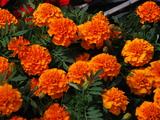 Flori pentru gradina ta