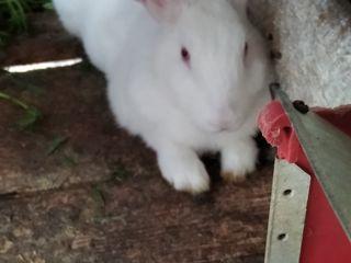 Продам  кролике 3,5 месяцев .