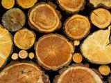 lemne de foc urgent urgent