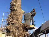 Taiarea copacilor, crengilor ce incurca la cunstructii , defrisari