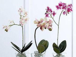 Горшки для цветов, горшки, поддоны для горшков, vase pentru flori