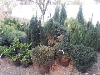 Plante decorative,ornamentale