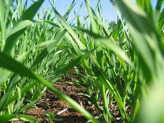 Vind pamant agricol - 2.6 hectare la 35 km de Chisinau