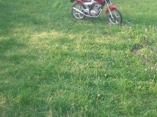 Viper 200cdi