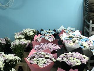 101 trandafiri la pret de 750 lei