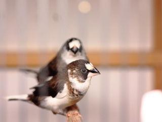 Самые милые птички для домашнего содержания!