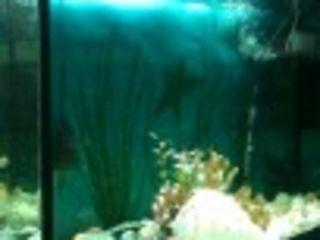 acvarium120litri