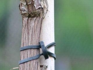 Подвязки для растений (якорные крепления и хомуты) Elastic pentru legat plante