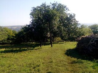 На  берегу днестра  шикарный участок  с домиком в пол -гектара
