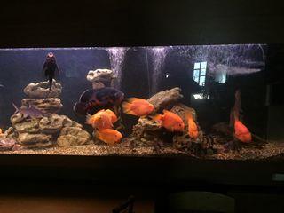 Продается аквариум 700 литров