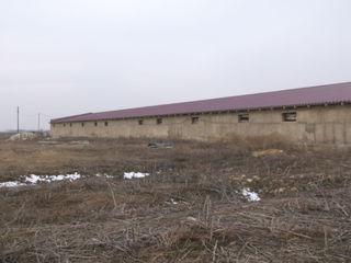 Фалешты бокс-ферма  1700м2  срочно!!   12*142 под производство - складские - ангар !
