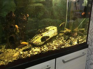 acvarium