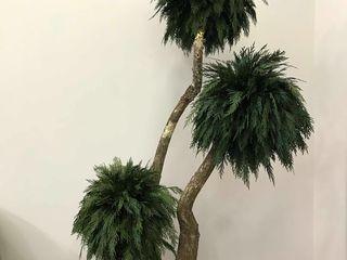 Стабилизированные растения в вашем интерьере !!! Plante stabilizate pentru interiorul Dvs.