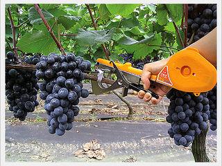 Инструмент и лента - FixRoll - для подвязки виноградника, саженцев, томатов, цветов и др.