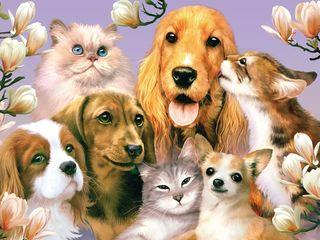"""Домашняя гостиница для животных """"Анастасия"""" всё как дома!"""