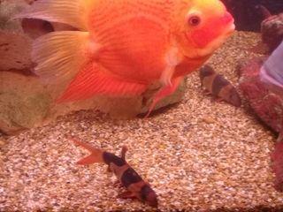 Продам аквариум с рыбами и оборудованием