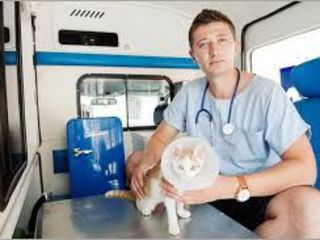 Ambulanta veterinara 24/24