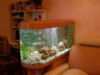 Обслуживание аквариумов и водоёмов