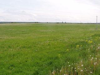 Cumpar teren (1-3 ha). Куплю участок (1-3 га).