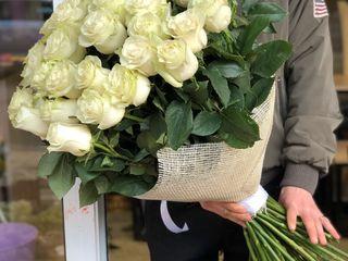 Trandafiri olandezi