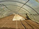 Дезинфекция почвы в теплице паром - Dezinfectarea cu abur a solului in sera