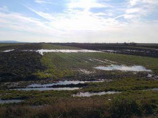Vând teren s.Curchi 15 ha