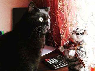 Пропал черный кот короткошерстный 8кг