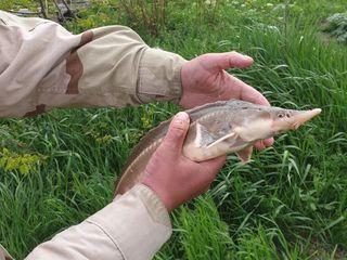 Рыбалка 30км от кишинева с. молешть рыбалка только по выходным дням пятница суббота воскресение