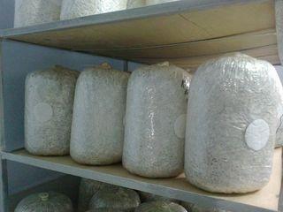 Мицелий вешенки - доставка по Молдове