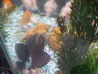 Золотые рыбки и акварюм