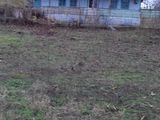 Vind urgent casa batrineasca cu 30 arii in satul Micauti r-ul Straseni 20 km de la chisinau