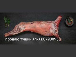 Продаю свежее мясо ягнят