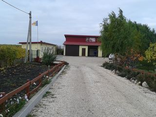 Виноградная плантация,холодильник,озеро,черешневый сад.