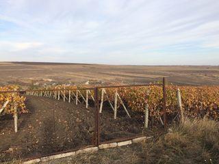 Cruzești/teren agricol / construcție