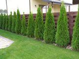 Декоративные растения для ландшафтного дизайна