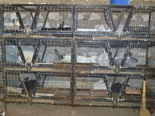 Iepuri de rasa Кролики ..adapatori pentru iepuri ,,pasari..chenchile