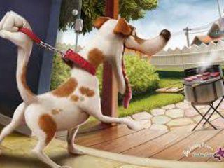 Воспитание всех пород собак,включая декоративные породы.