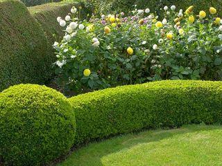frezam  arbustii